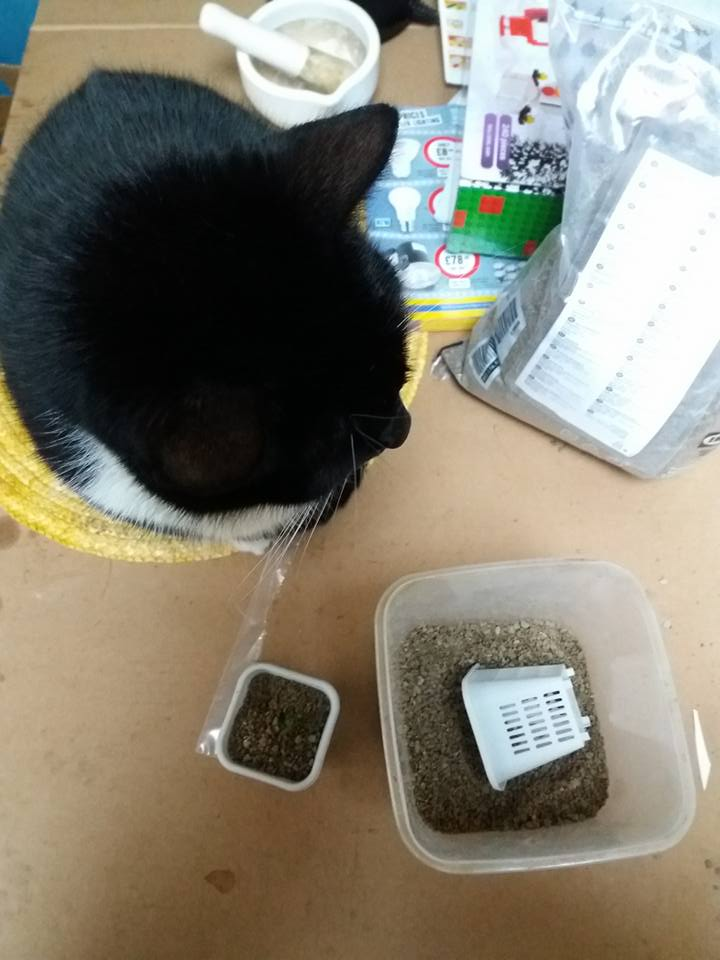Scumspawn thinks that everything is cat food