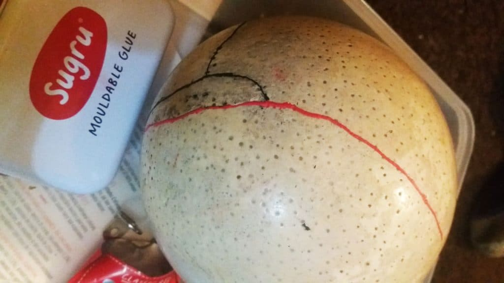 fixed ostrich egg