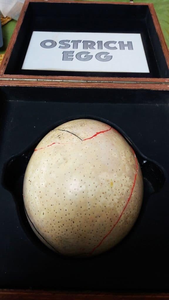 mended ostrich egg