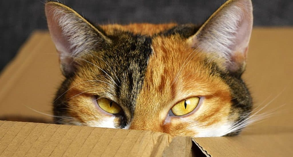 decluttering box with cat in