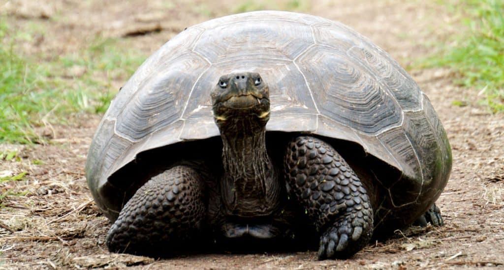 a tortoise not shopping!